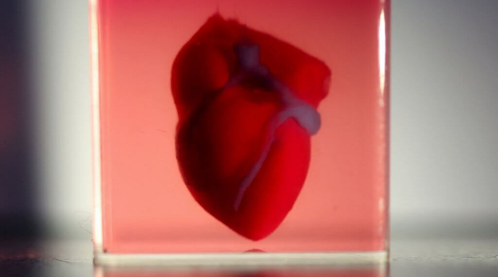 3d and 4d printed organs are possible